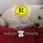 hotel pet friendly forte dei marmi