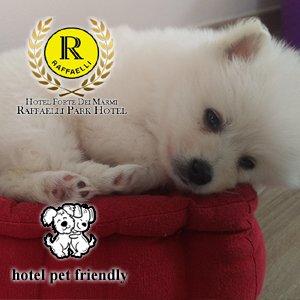 Hotel Pet Friendly Forte dei Marmi: ospitiamo il tuo animale domestico perchè qua è il benvenuto!